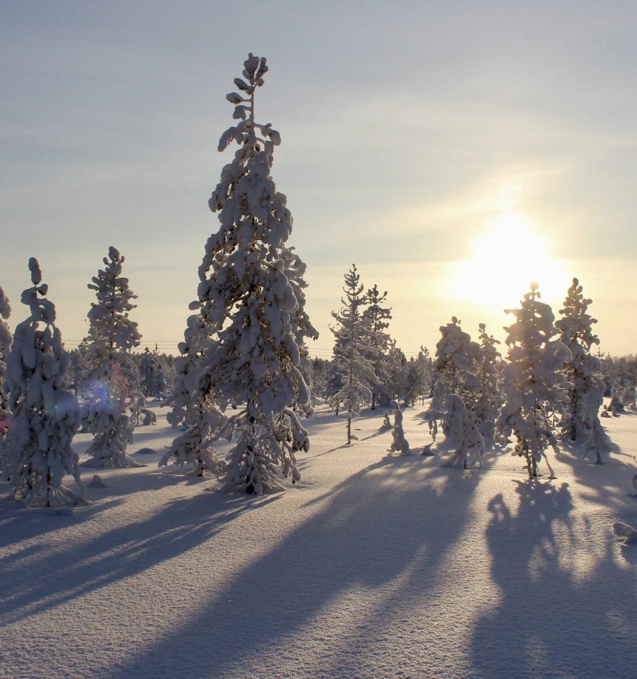http://Winter%20photo